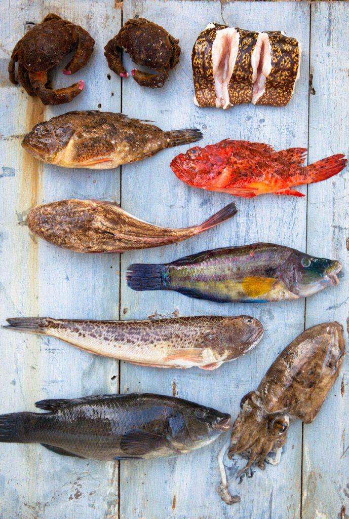 photo de divers poissons